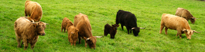 Grass Fed Beef-SHC