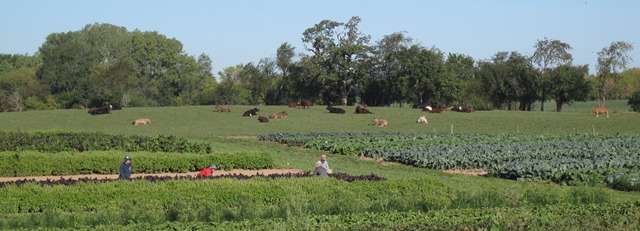 biodynamic-vegetables-people-cows