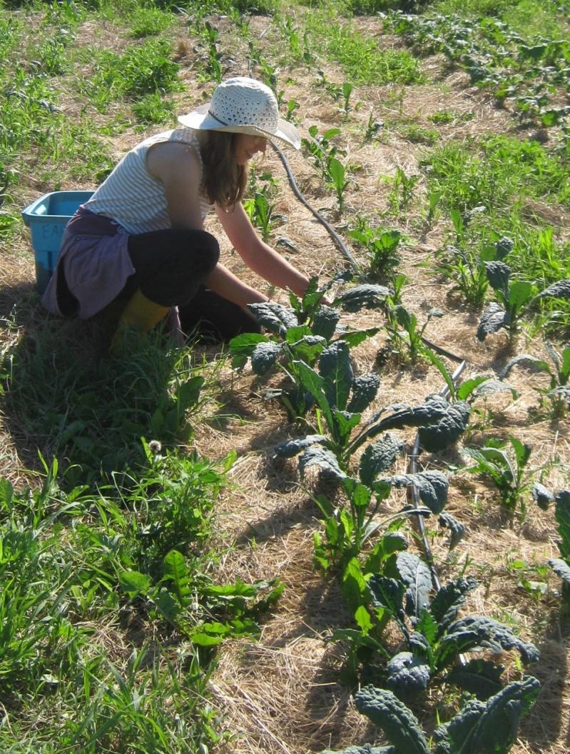 Seasonal Help Wanted Earth Haven Farm